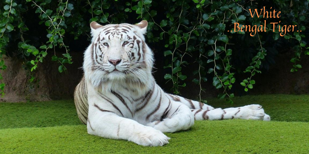 Images of tiger day