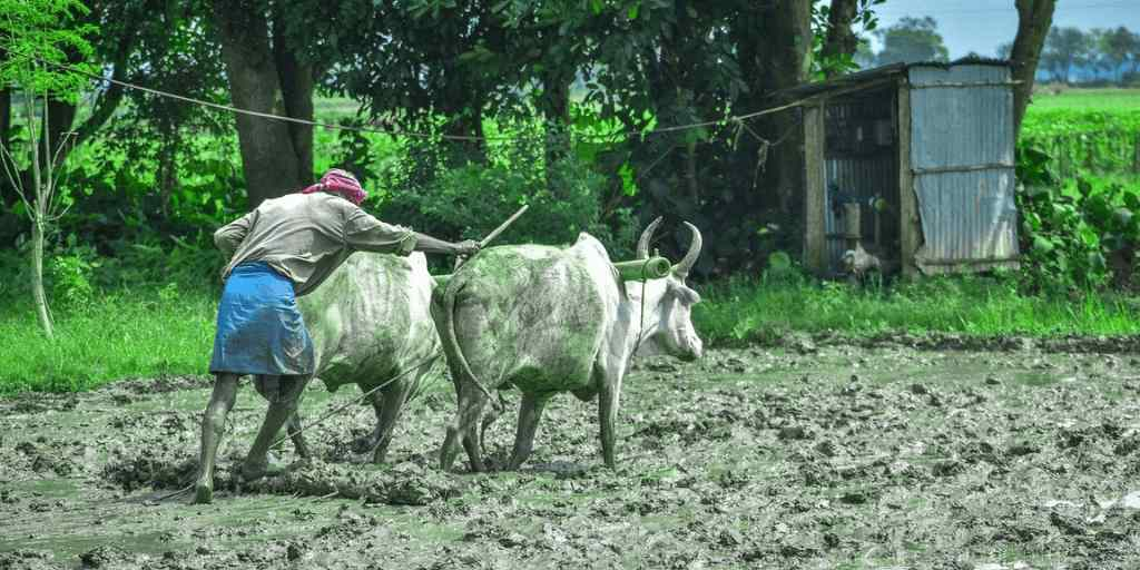 National Farmers Day of India 2020 | Things to know |